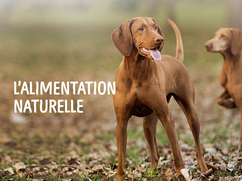 Alimentation naturelle et instinctive TrueInstinct