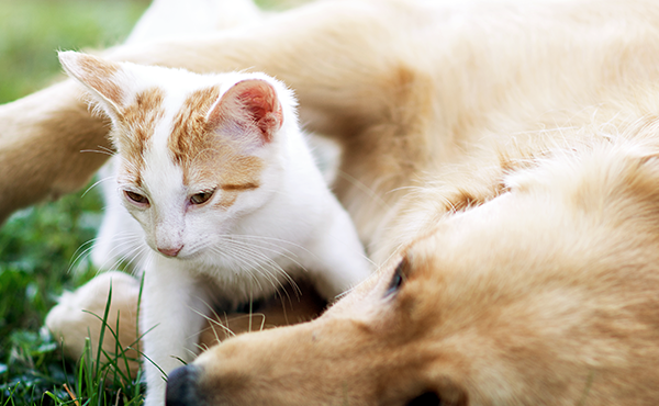 Tips for Dogs and Cats TrueInstinct