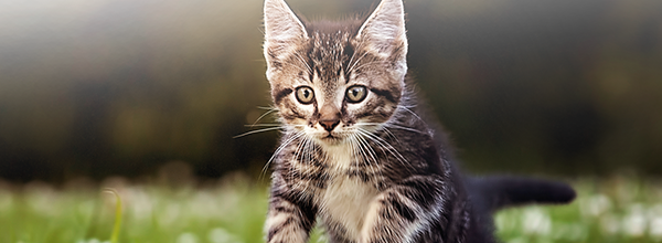 Cat's hunter instinct